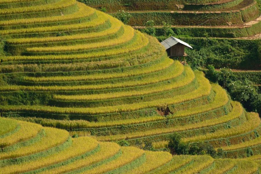 Rice terraces in Vietnam along Mu Cang Chai region.